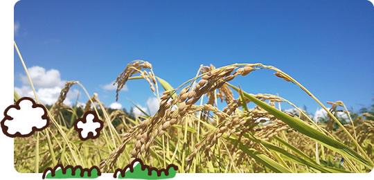 嘉穂盆地米について